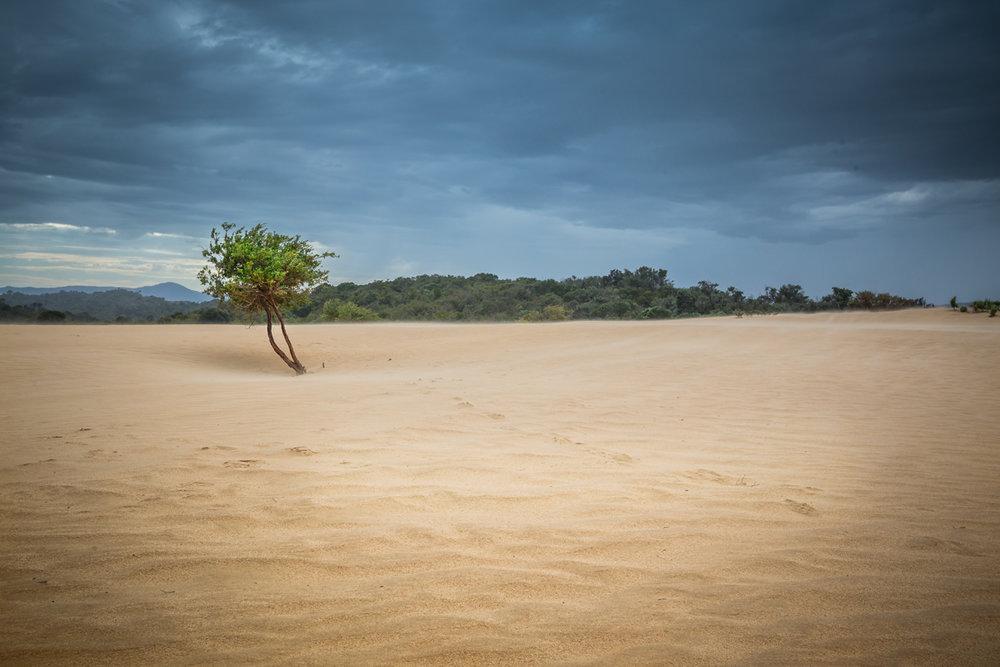 AnneAlgar _ Resilience.jpg