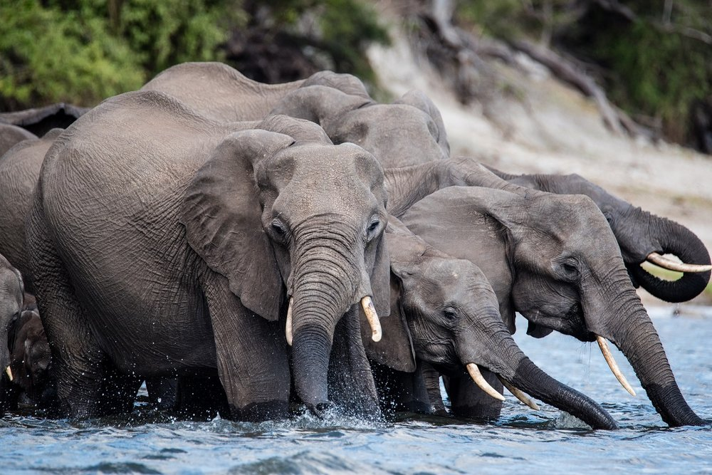 Kathleen_Gerber_Elephant_Herd.jpg