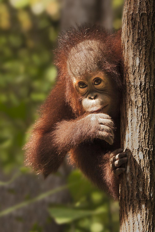 VICKY_FUNSTON_WILD LIFE_TREE PEEKING_6.jpg