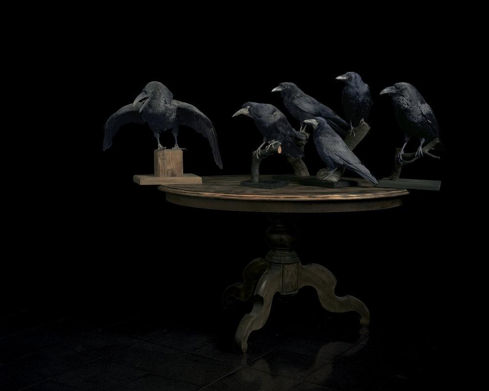 Brigitte_Lustenberger_ThisSenseOfWonder_Birds_05.jpg