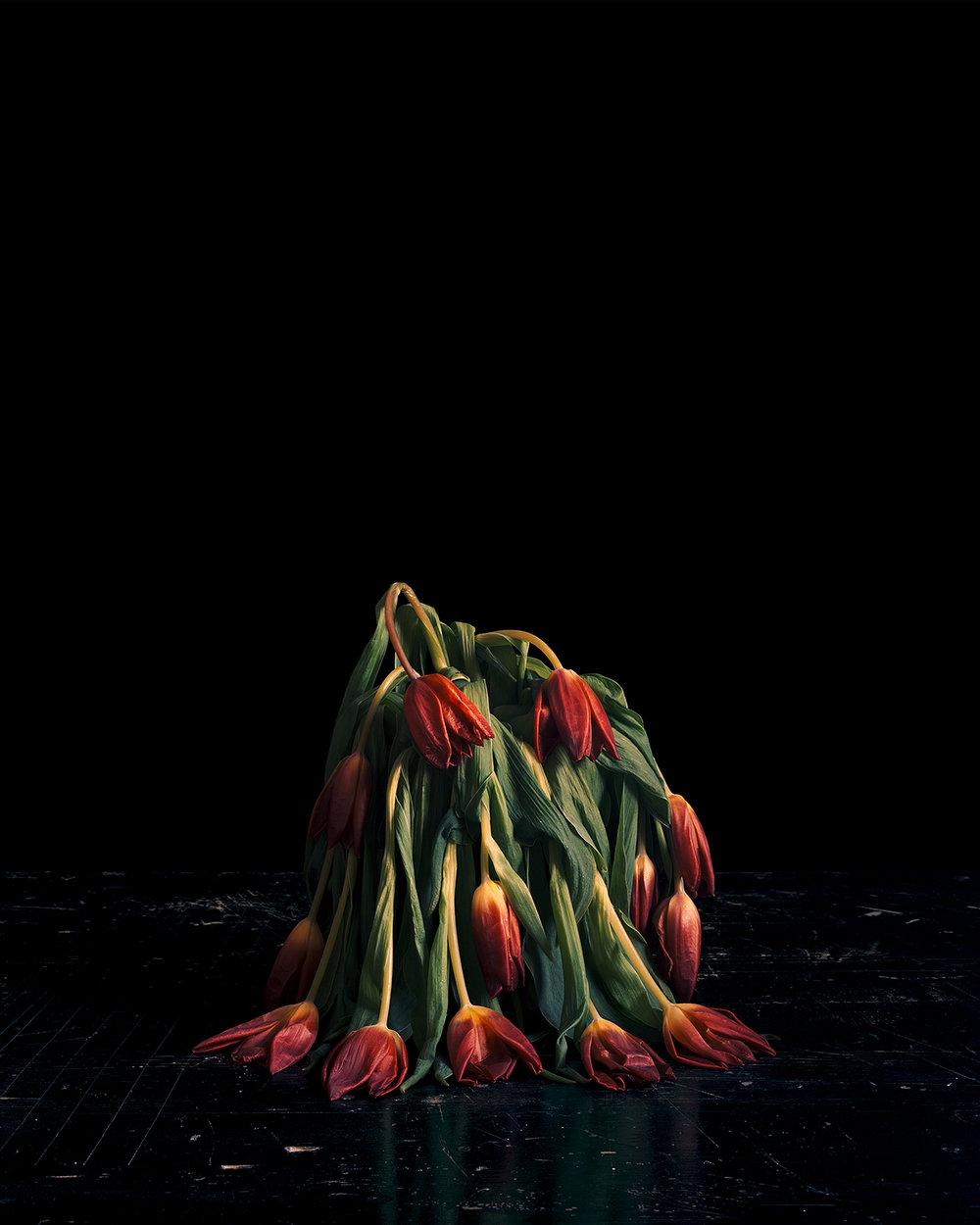 Brigitte_Lustenberger_ThisSenseOfWonder_FlowersV_06.jpg