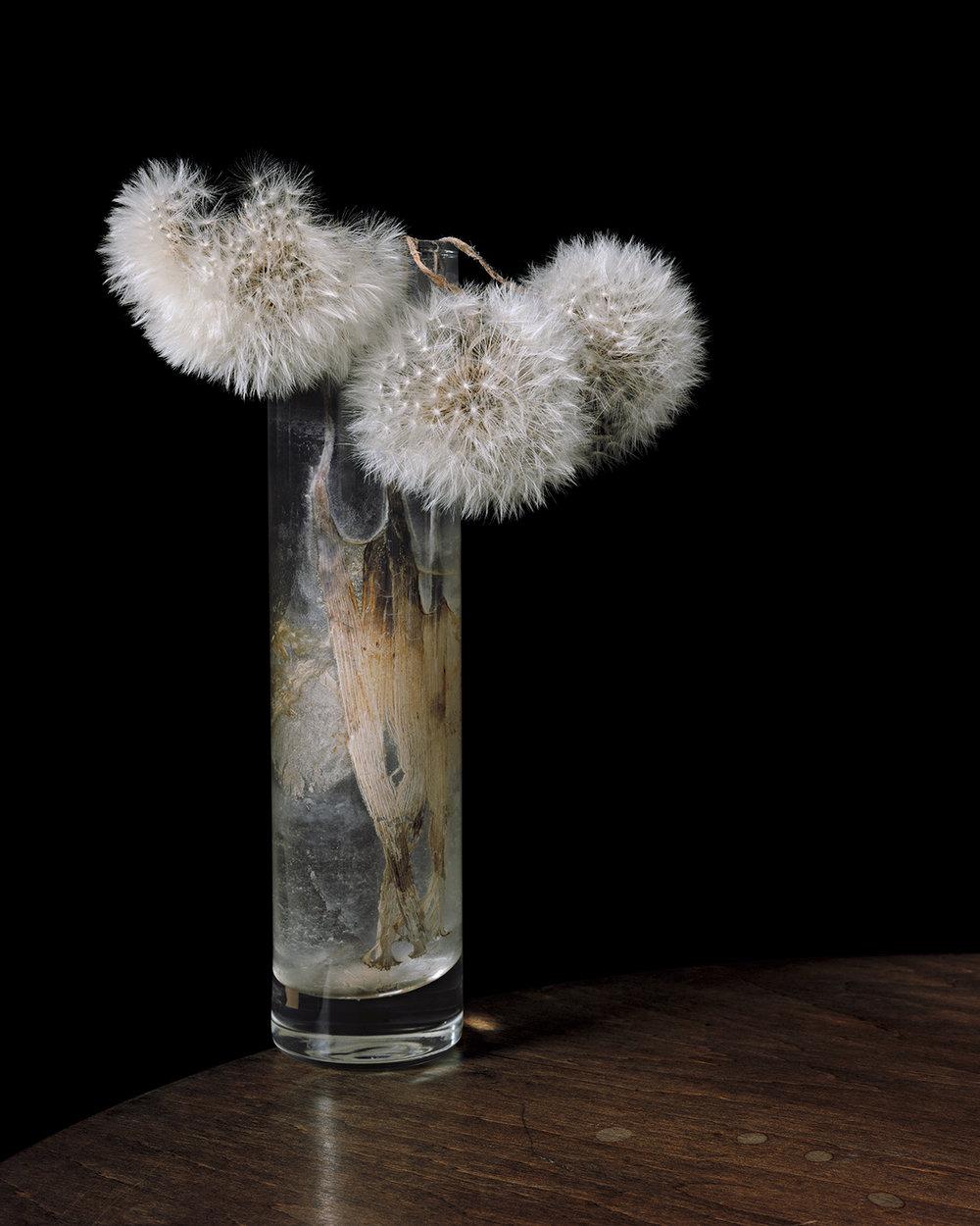 Brigitte_Lustenberger_ThisSenseOfWonder_FlowersXXXIX_04.jpg