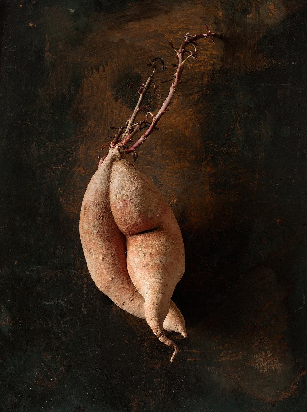 52_Beth_Galton_Amour_de_Pomme_de_Terre_Garnet_Sweet_Potato_15days-b_4.jpg