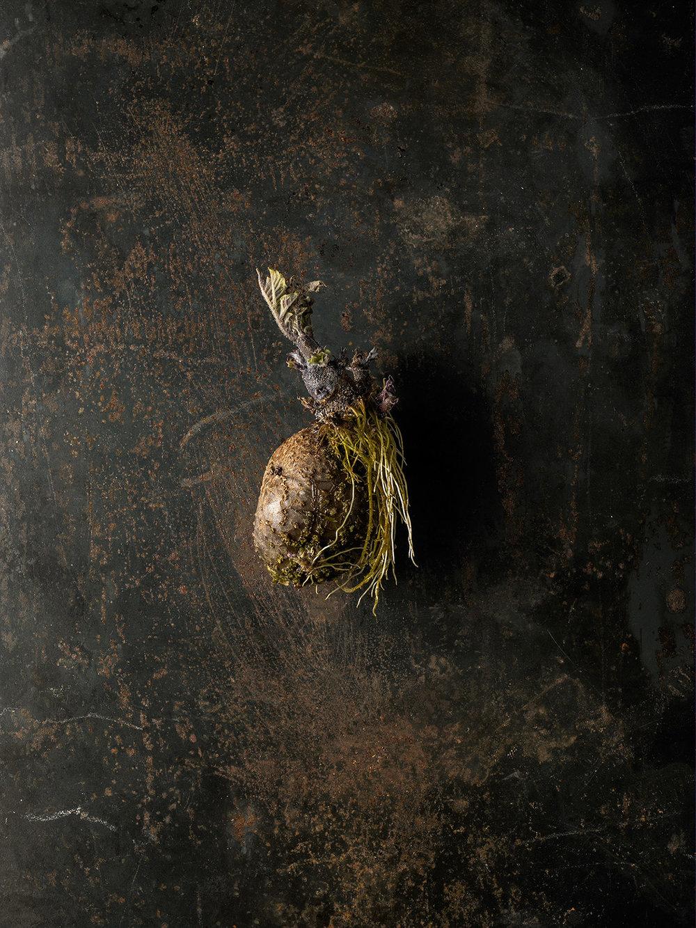 52_Beth_Galton_Roots_Yukon_Gold_Potato_6.jpg