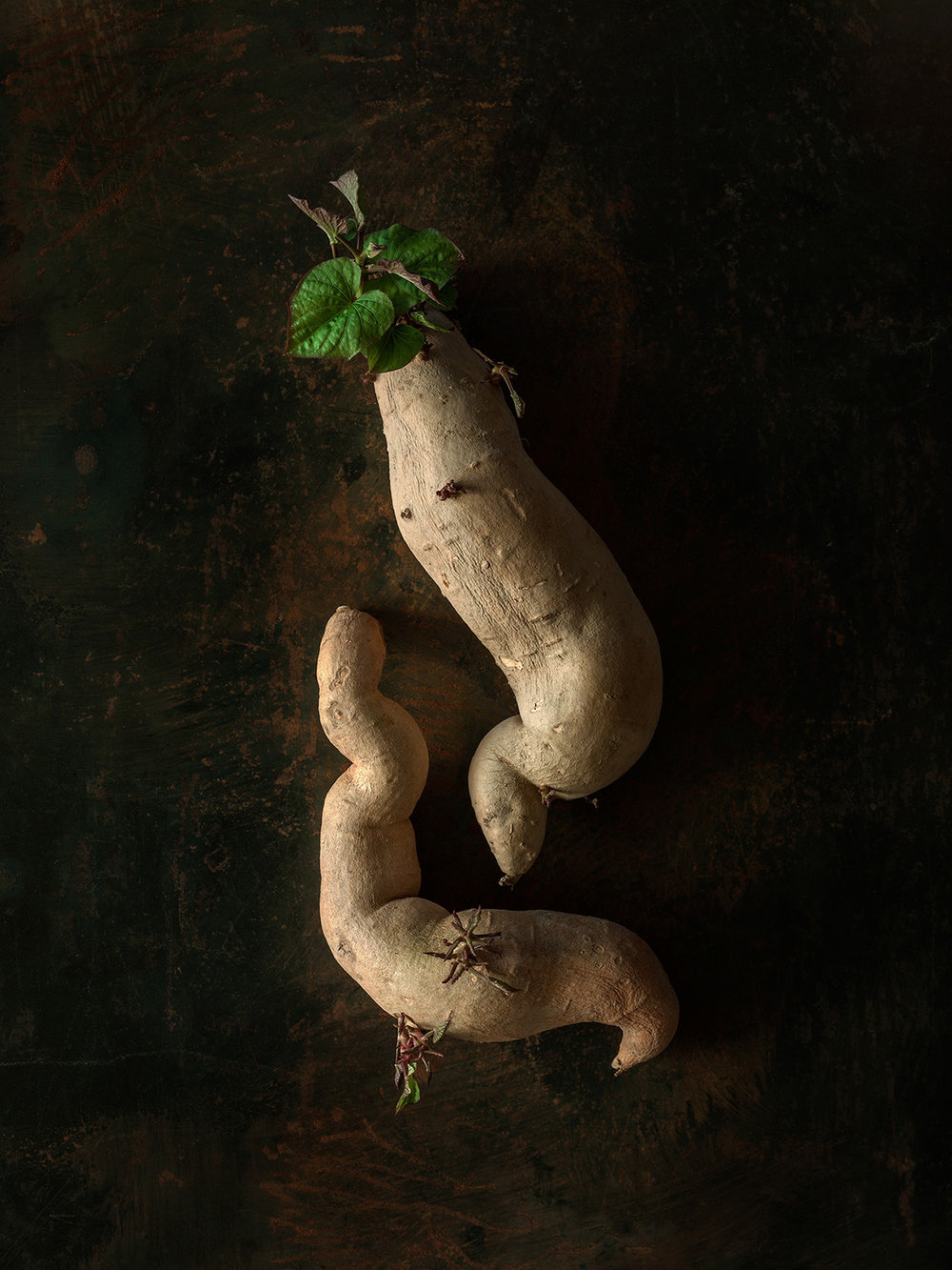 Beth_Galton_Amour_de_Pomme_de_Terre_Fingerlin_Sweet_Potato_6_4days_5.jpg