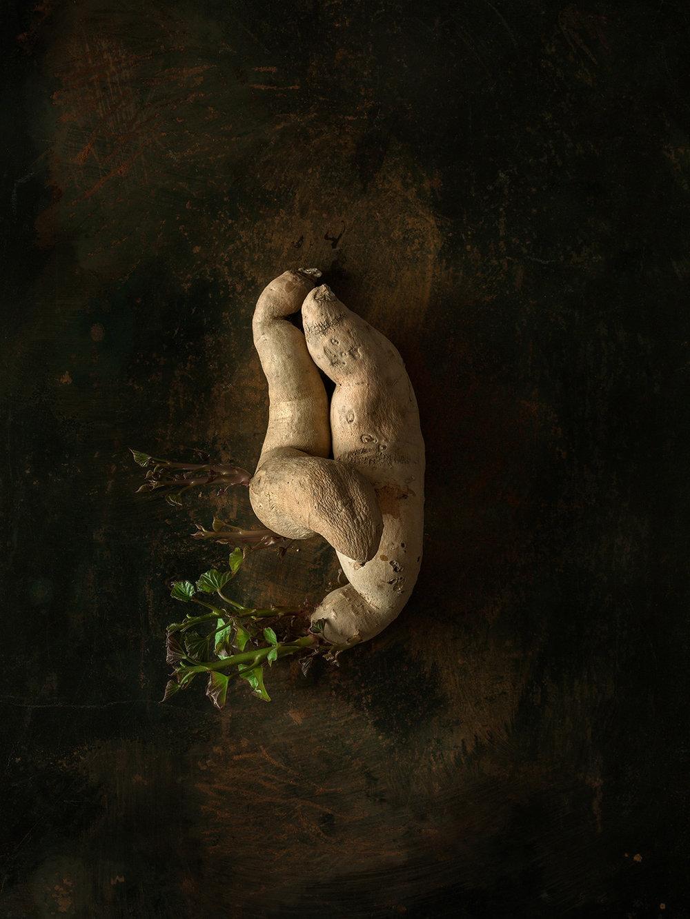 Beth_Galton_Amour_de_Pomme_de_Terre_Fingerlin_Sweet_Potato_12_6days_6.jpg