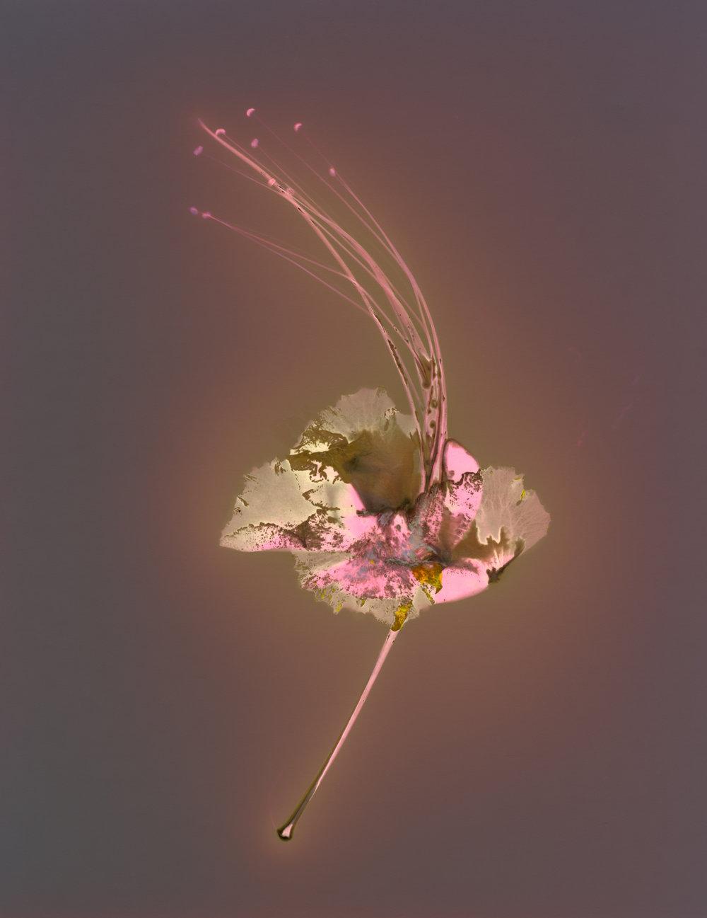 laurent_girard_lumens_untitled_1.jpg