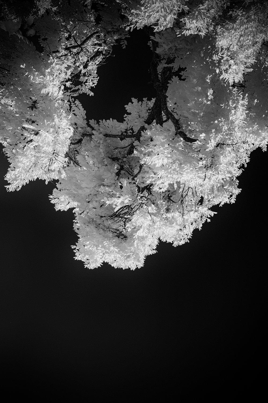 Pepe_Pax_Pure Infrared.jpg