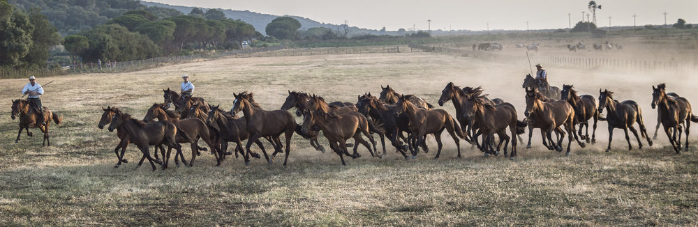 Gabrielle_Saveri_Italian Cowboys of Maremma_Butteri Herding Foals Through Large Meadow.jpeg