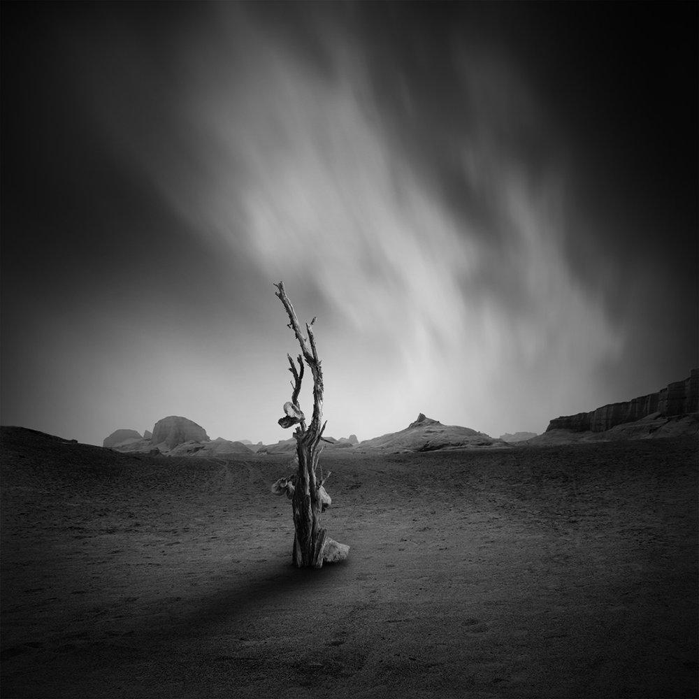 Tree of life by Hasibe Borhani (1).jpg