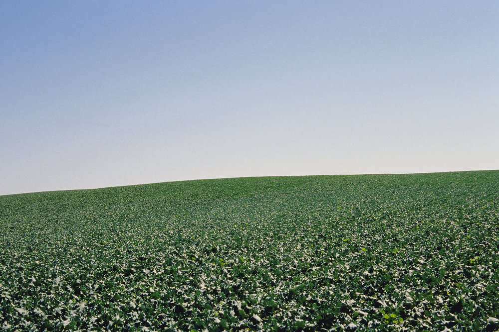 James_Cooper_Agricultural Fields_Cabbage Field_5.jpg