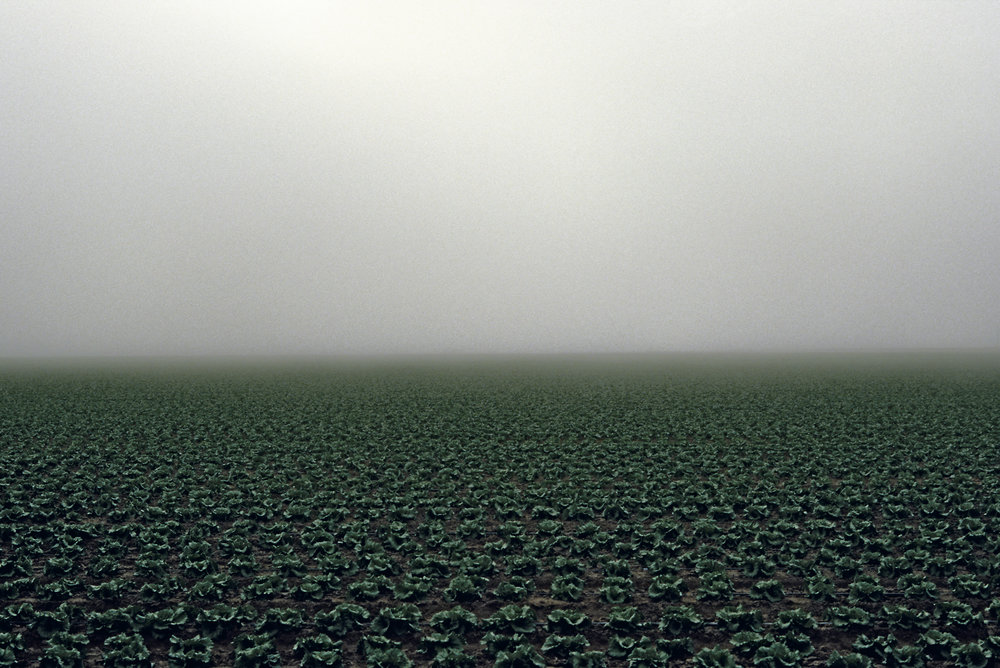 James_Cooper_Agricultural Fields_Lettuce Field_6.jpg