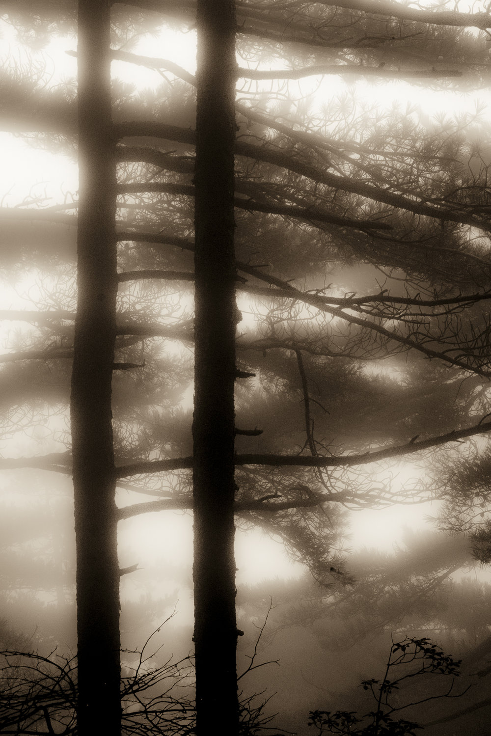 Carol_Horigan_Forest Shrouded in Mist-3V.jpg
