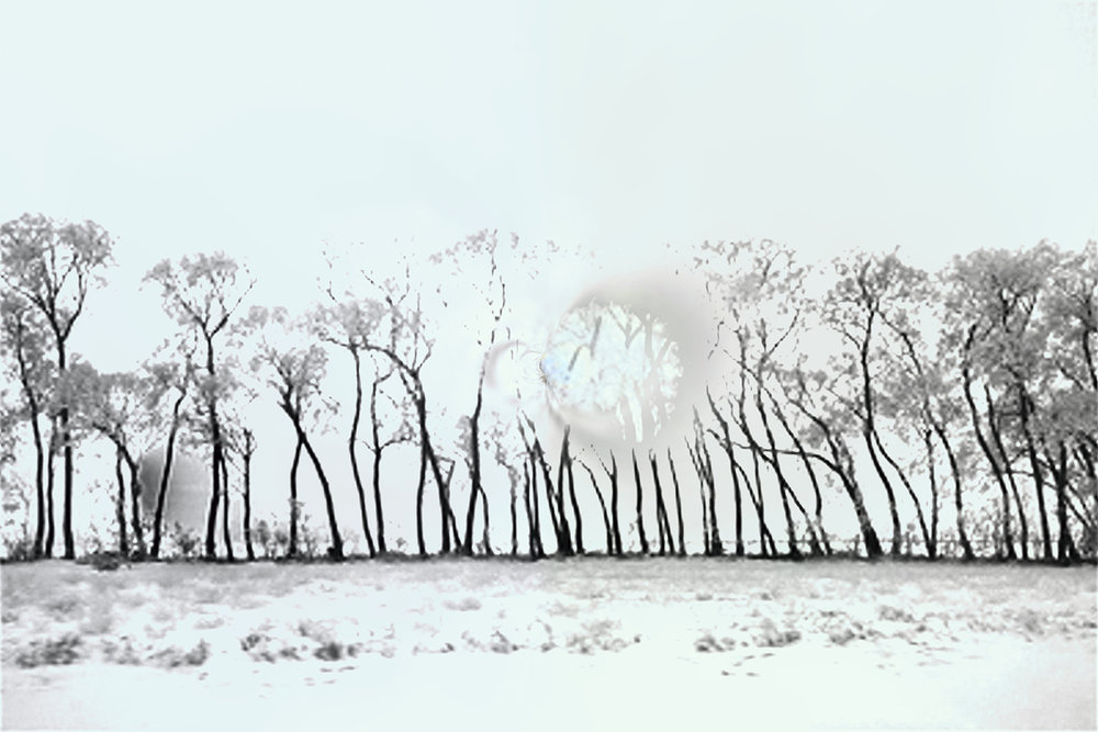 Elaine Hunter_Saskatchewan Trees_6_6.jpg
