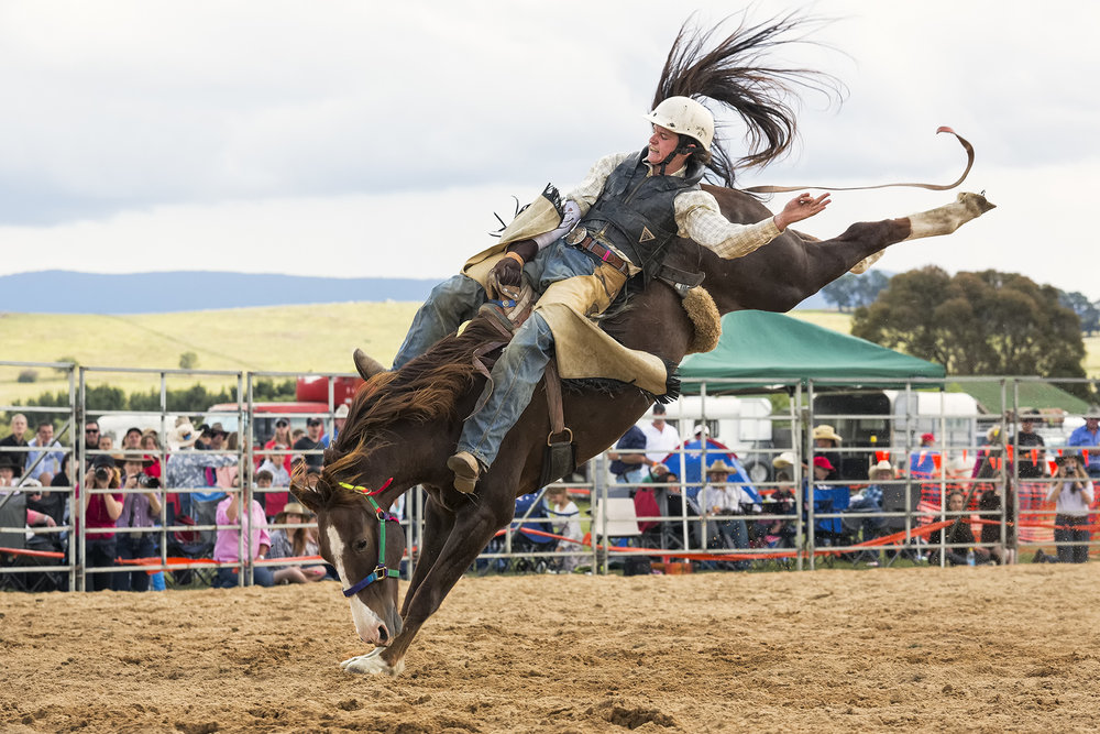 Brian_Jones_Rodeo Thrills and Spills_Bareback 2_4.jpg