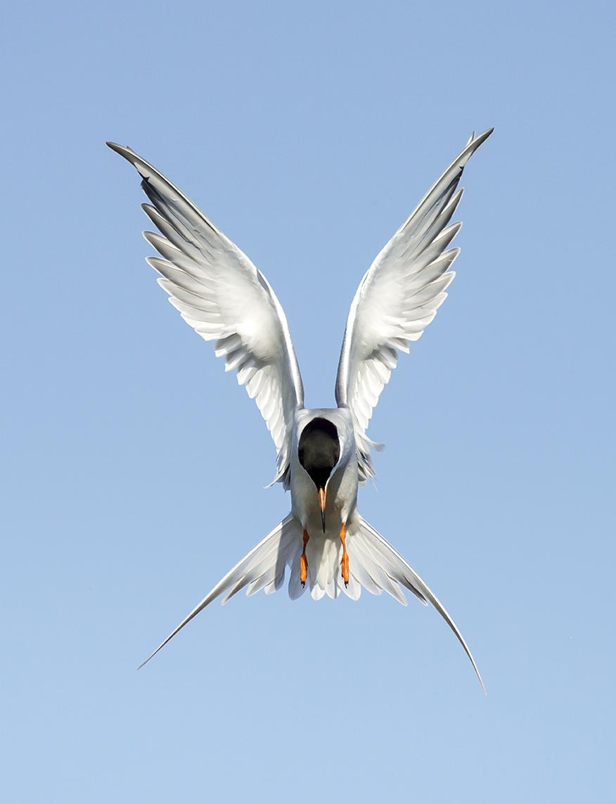 Diana_Rebman_BirdsHovering_3.jpg