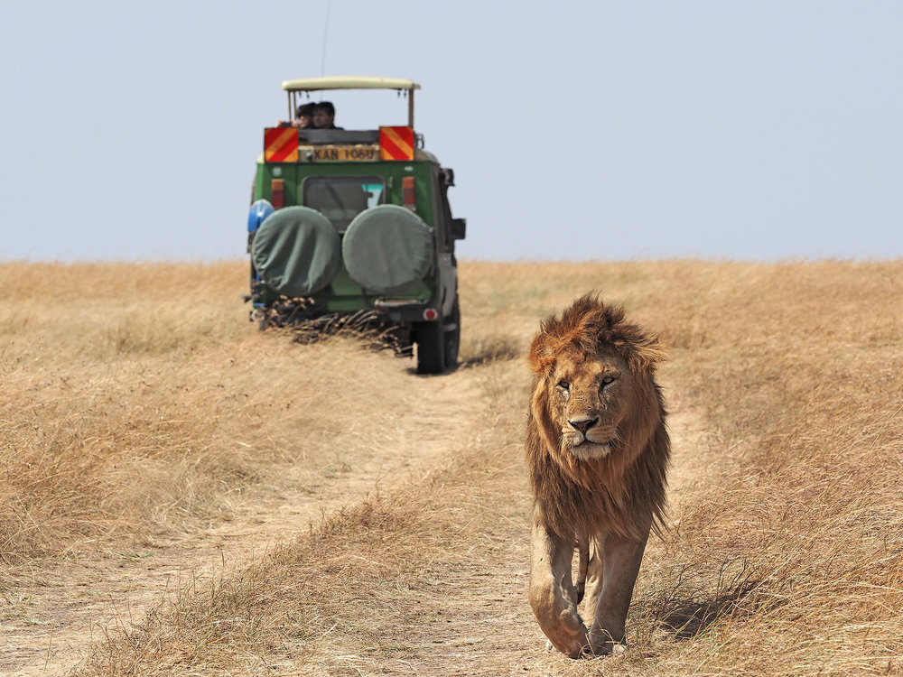 Ranjan_Ramchandani_The King walks.jpg