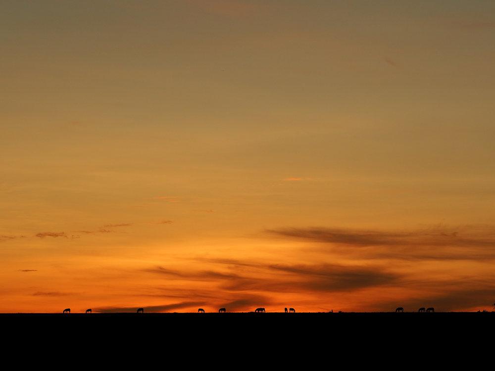 Ranjan_Ramchandani_Sunrise in the Savannah.jpg