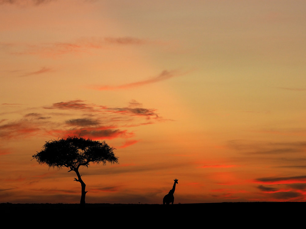 Ranjan_Ramchandani_A morning in the Mara.jpg
