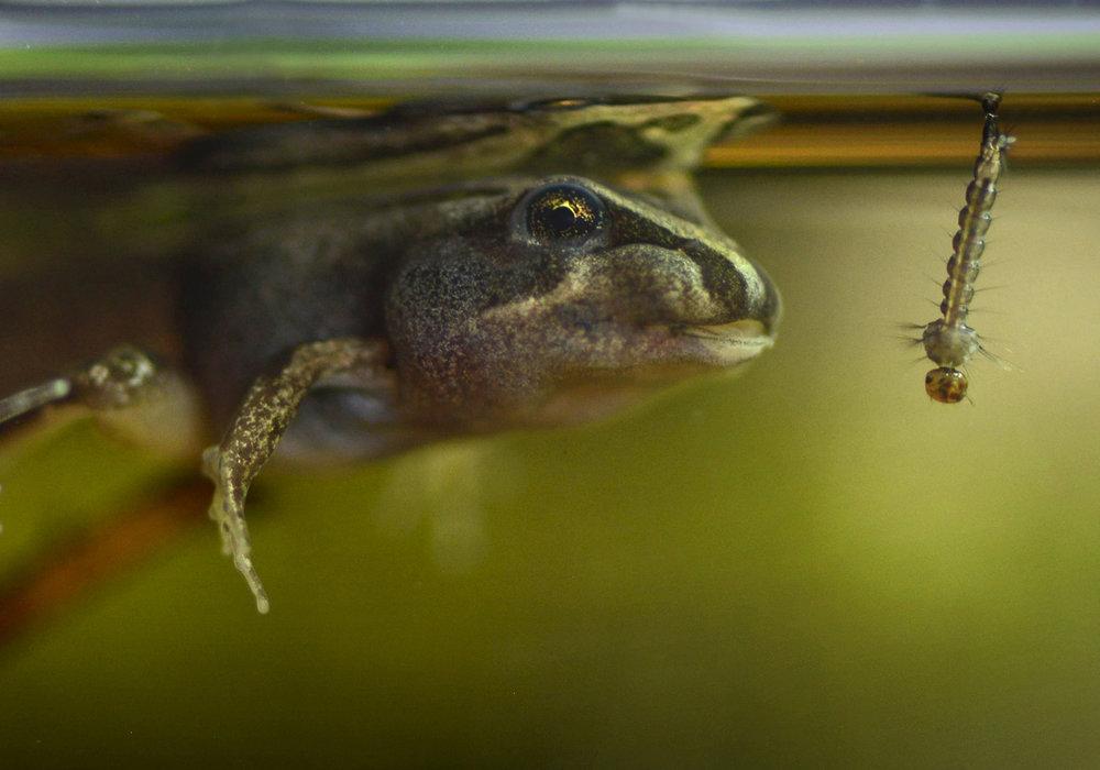 Karen_Burgess_Becoming a frog_3.jpg