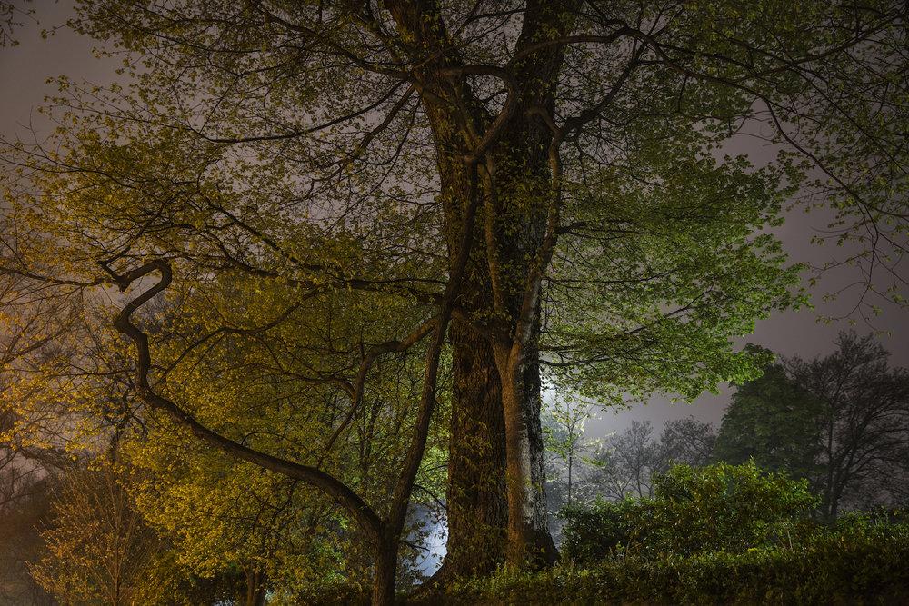 Sue_Bailey_Night Trees_Branch Curl_6.jpg