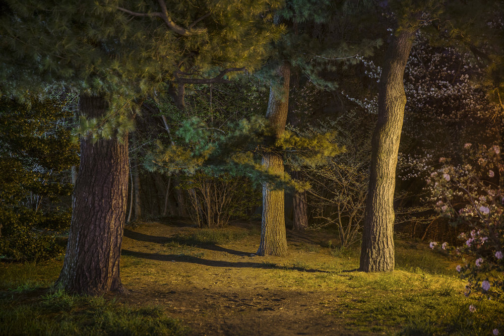 Sue_Bailey_Night Trees_Brooklyn Three_2.jpg