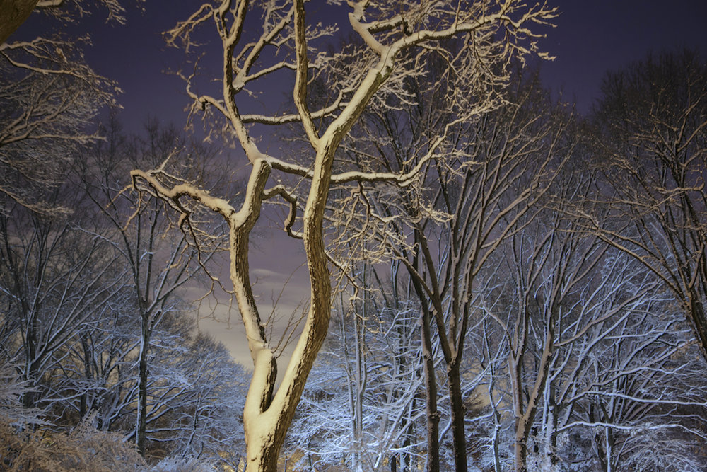 Sue_Bailey_Night Trees_CPW Snow_4.jpg