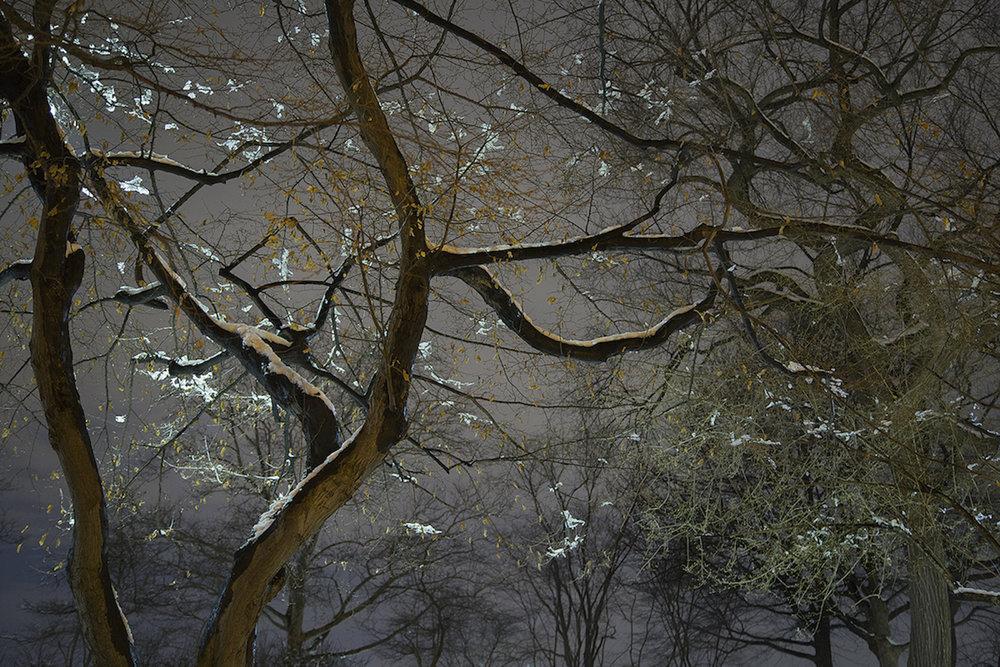 Sue_Bailey_Night Trees_Japanese Snow_4.jpg