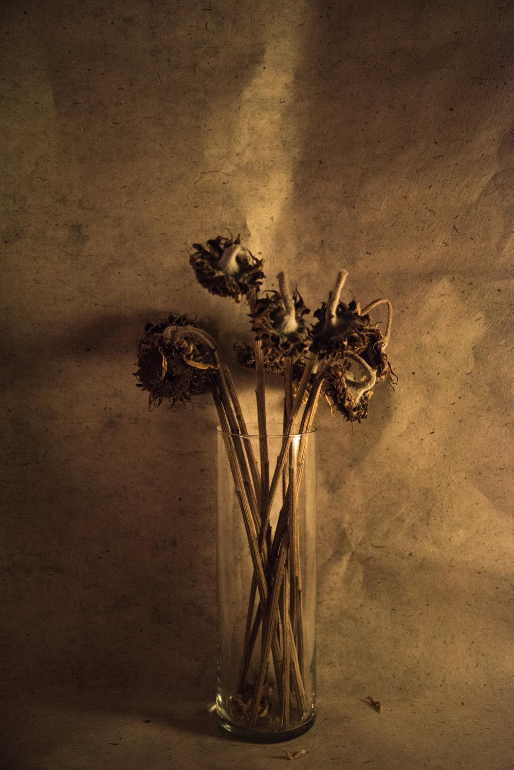 Nadide_Goksun_Sunflowers.jpg