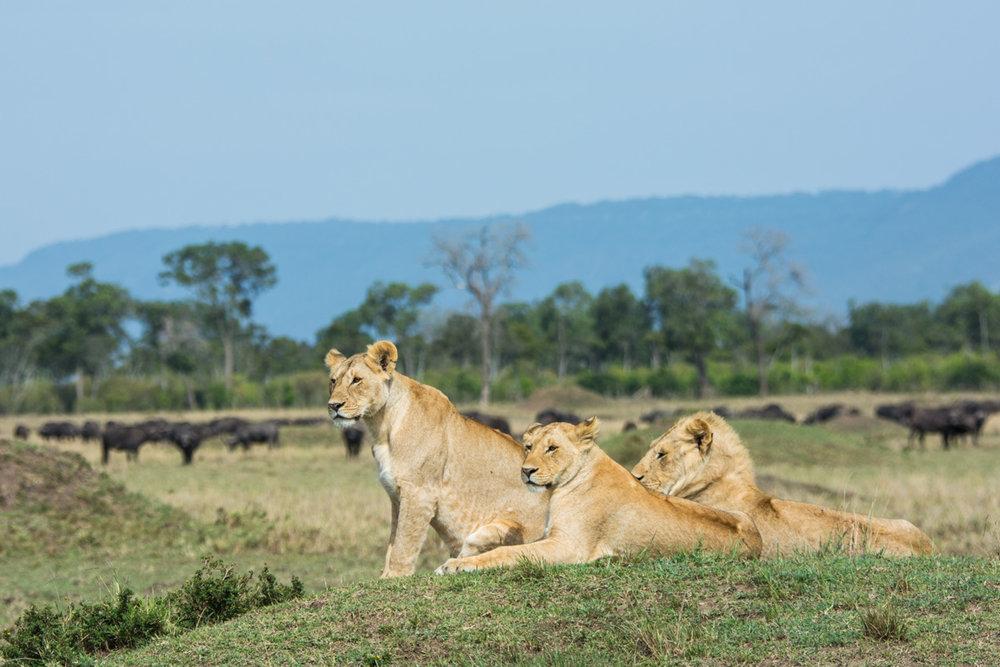 Jane_Walker_On Safari6.jpg
