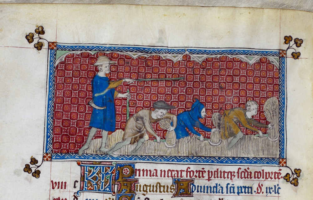 4. Harvesting wheat in the Queen Mary Psalter. © British Library Board. London, British Library, Royal 2 B.vii (Westminster, London or East Anglia, between 1310 and 1320), folio 78v. By permission.