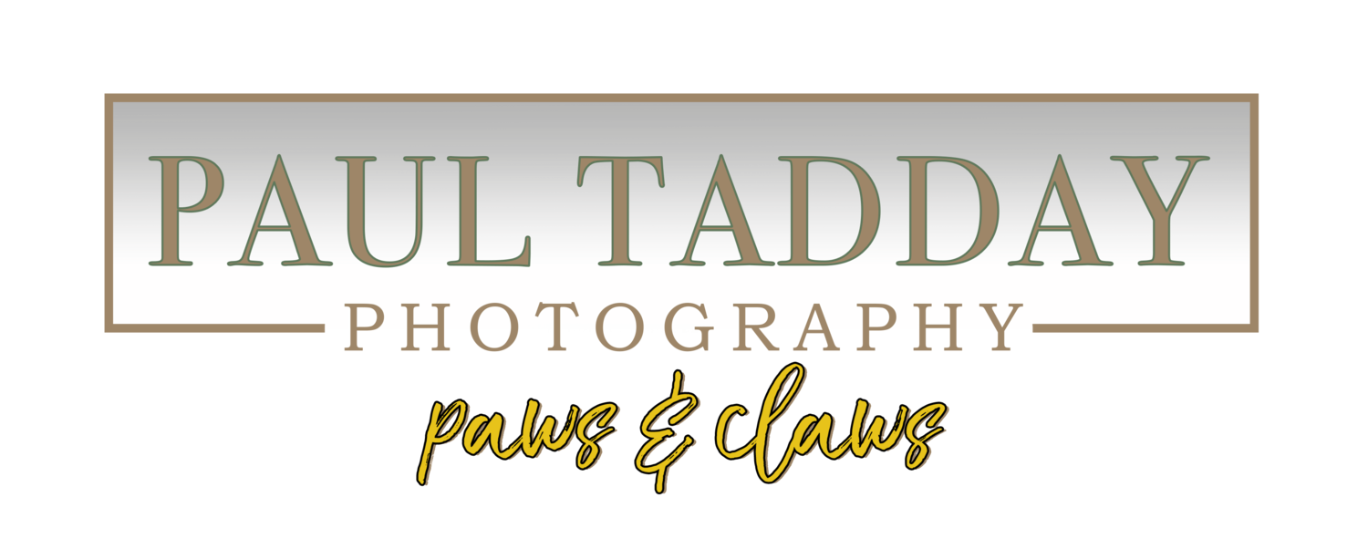 Paul Tadday Photography - Paws & Claws