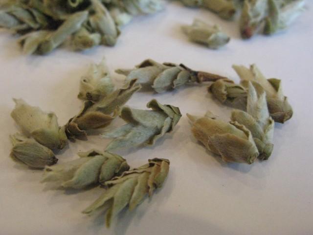 Wild Arbor Buds 4.jpg