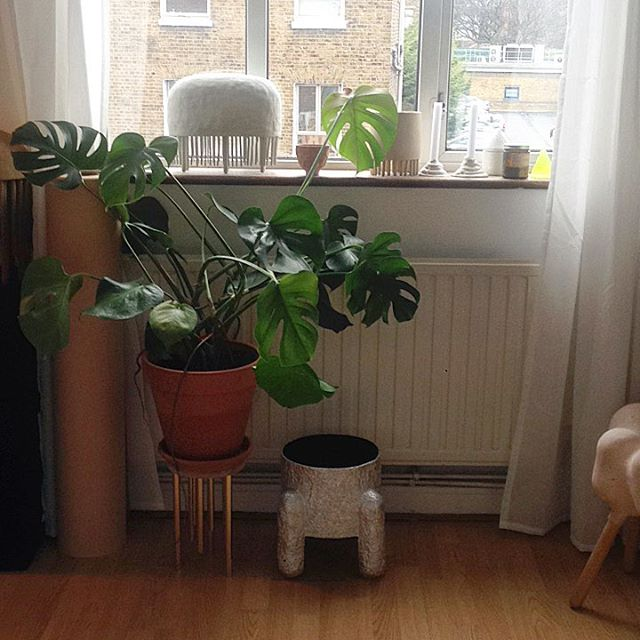 🌱🤷🏼♀️🙃 #plant #ceramics #design #littlelegs #memastudio #hackney #london
