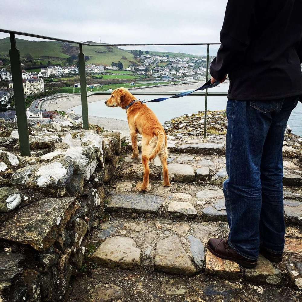 - As the weather turned milder Bryn got his first castle experience - here he is surveying the fantastic views from Criccieth castle, which we followed with lunch at the always-excellent Big Rock cafe in Porthmadog.