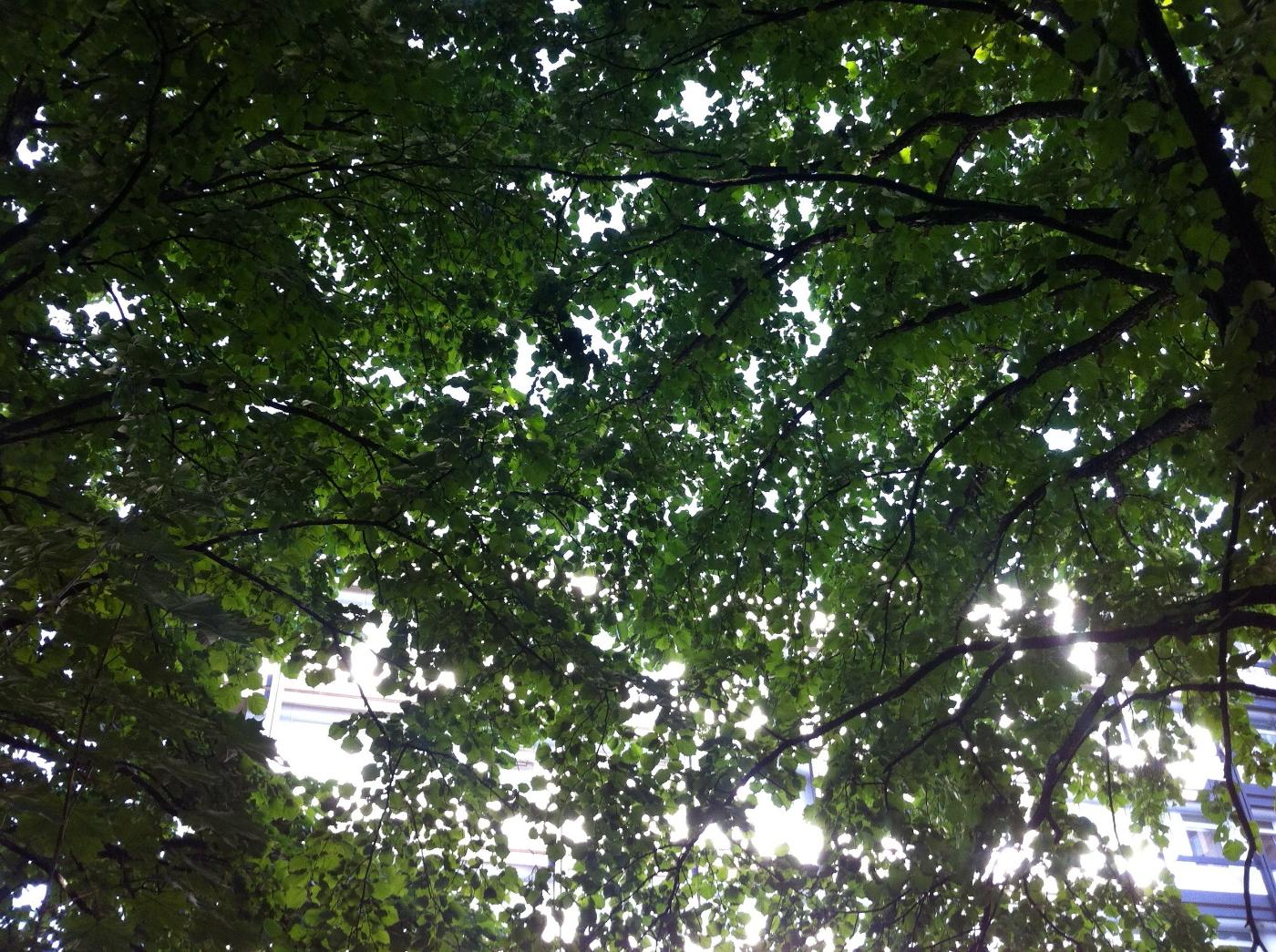 Der Grenzbaum Geliebt Und Gehasst Rasa Machwerk