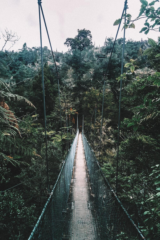 NZ site-17.jpg