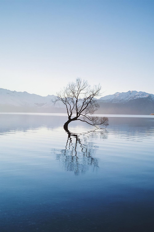 NZ site-21.jpg