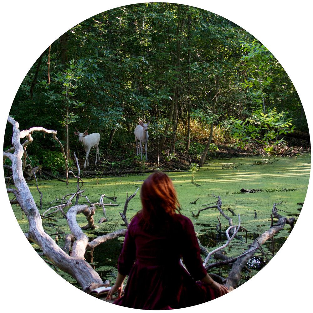 Swamp, 2011