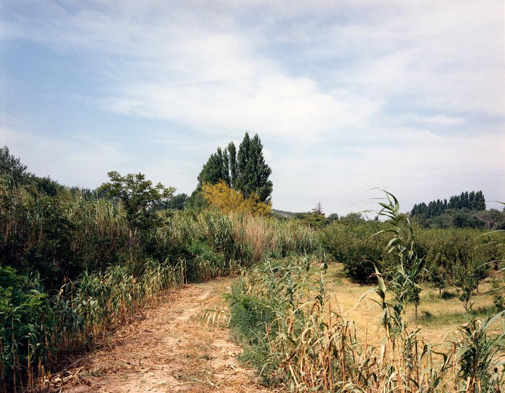 Provence 12.jpg