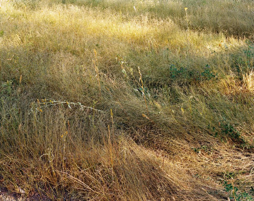 150 Grass.jpg
