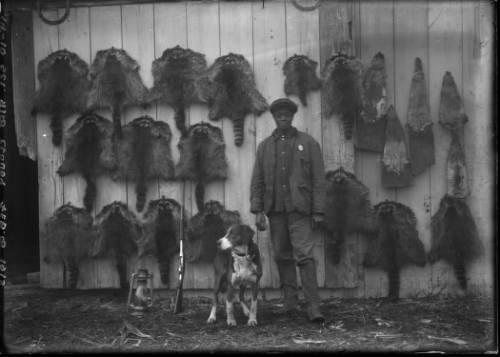 racoon pelts.jpg