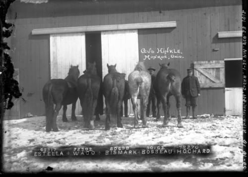 gus hinkles horses.jpg