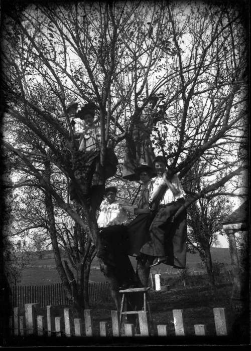 tree monroe blog.jpg