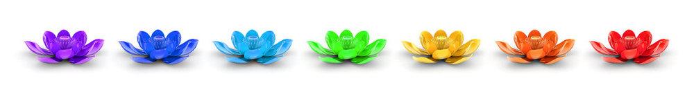 l-arc-en-ciel-colore-lotus-flowers-49030316.jpg