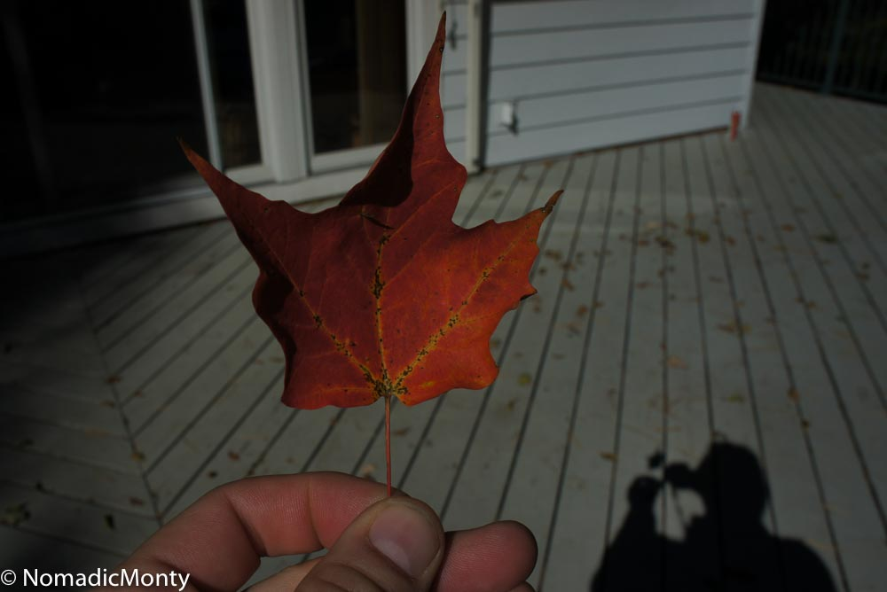 Canada Maple Leaf