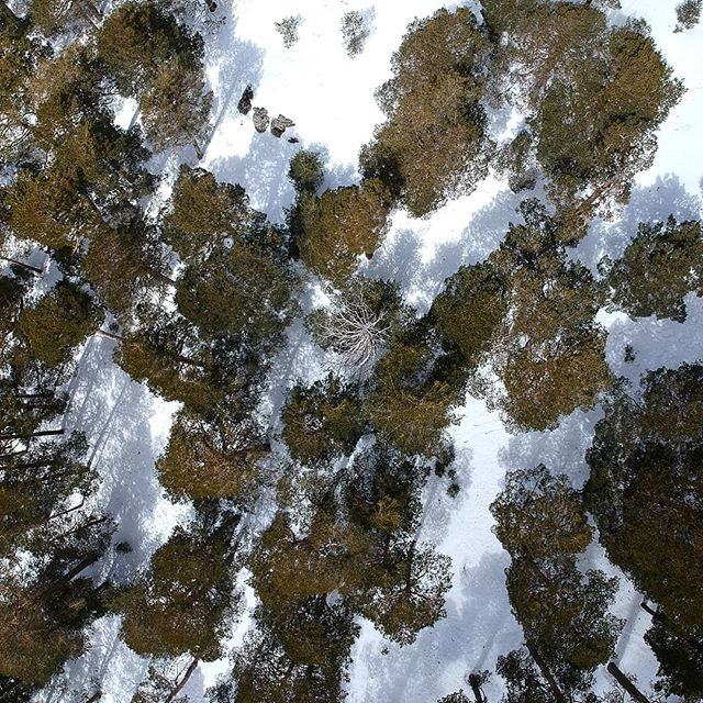 aerialvideos#drone#snow#pine #pinetrees #madridvideos#eventosmadrid #madridmarket #waves#snowflakes #europe #content#winter #madridstreets #cold#dronedji#djispark#dji#miamidrone#air#aerial#aerialvideos#javierospina#photography#aerialphotography#yoga#studios#instagood#instagram#insta#instafit