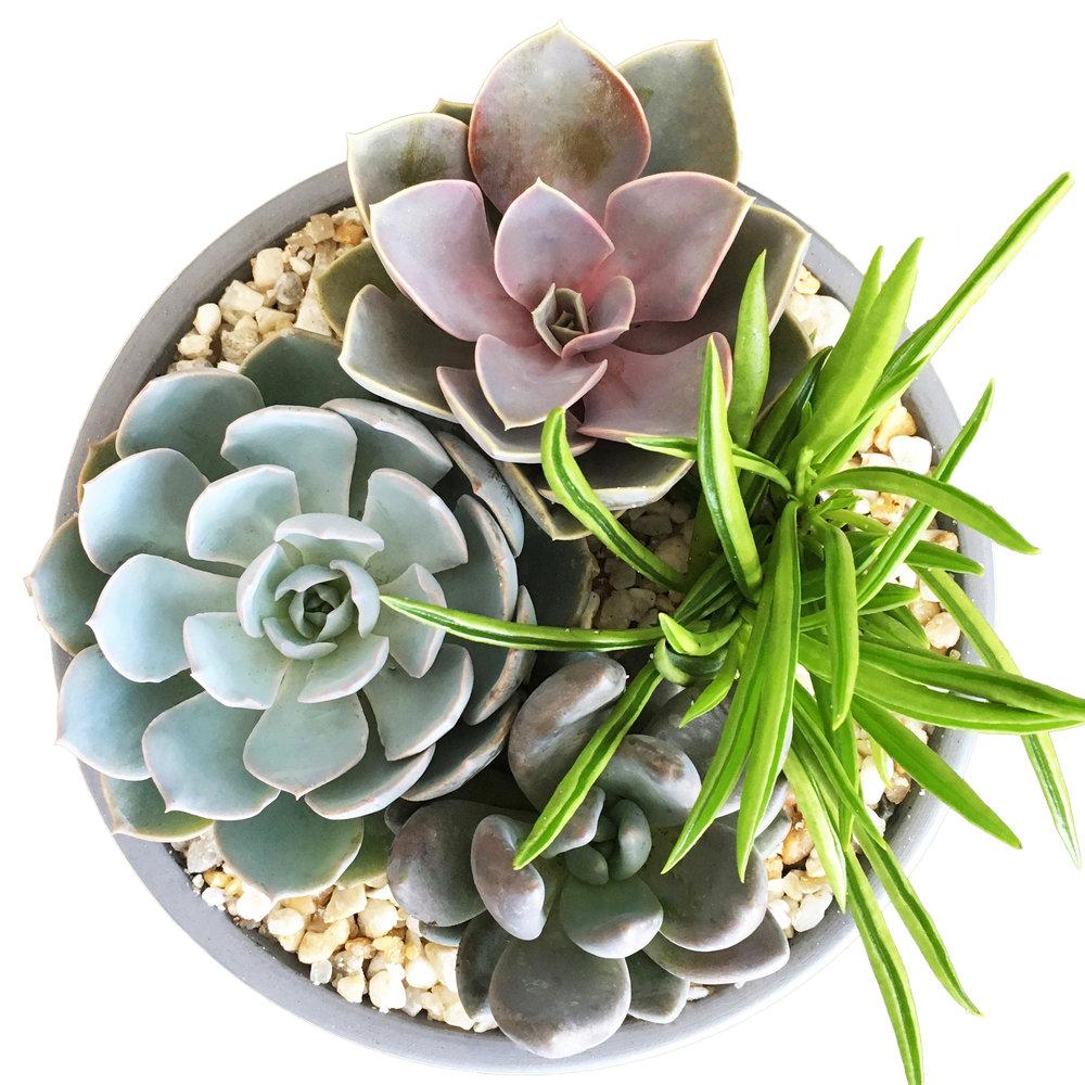 dish garden succ copy.jpg