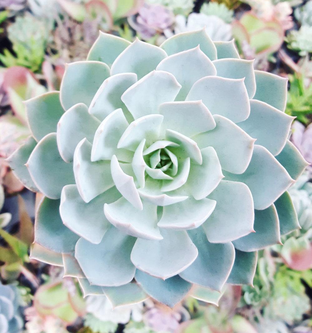 Succulentssssss.jpg