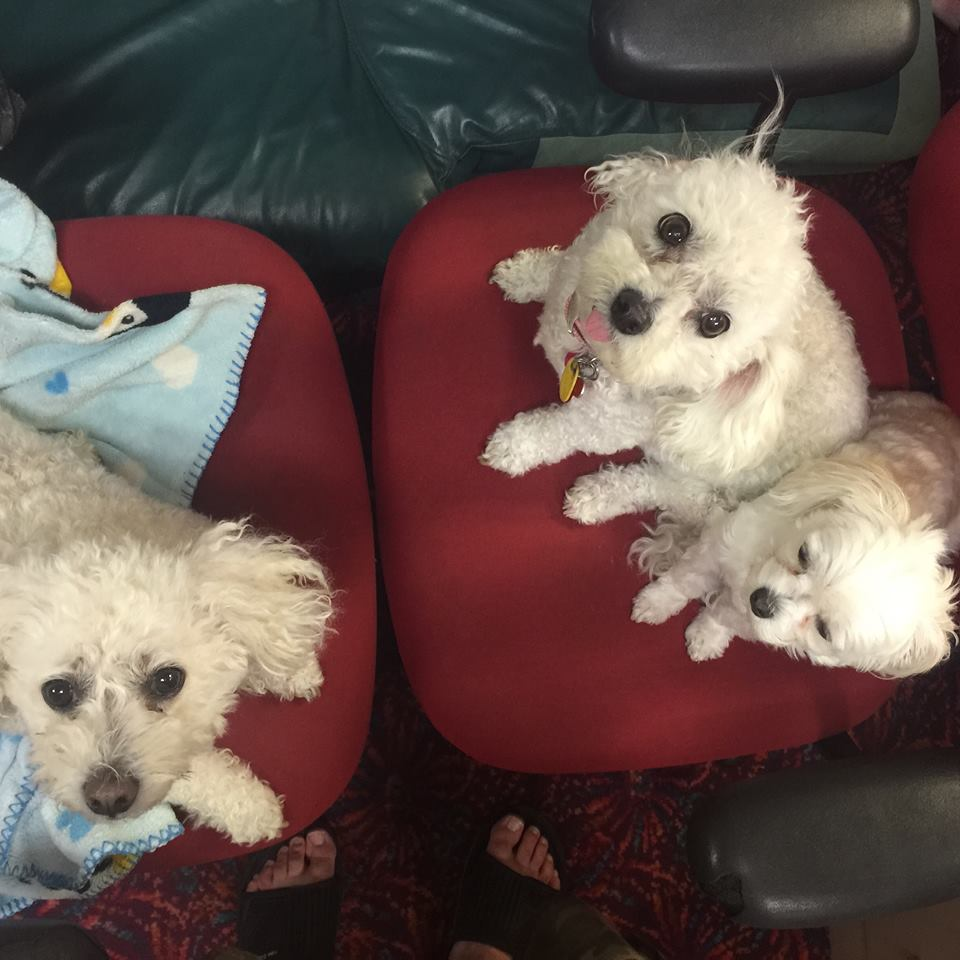 The Puppies! - Security Force   Currently retired, Bebe, Bella, and Baby Face served as the Affordable Insurance security force for years, keeping the office safe from bad rates! Once in awhile they will come out of retirement, so keep a look out! 🐾